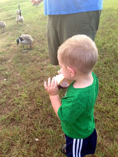 Feeding ducks - jack